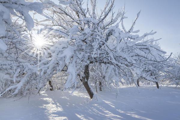 В средней полосе России земля покрыта снегом пять месяцев в году