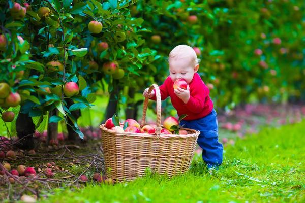 В саду в пору сбора урожая в ходу любые корзины - от мала до велика