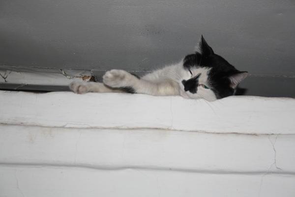 кот Василий на печке