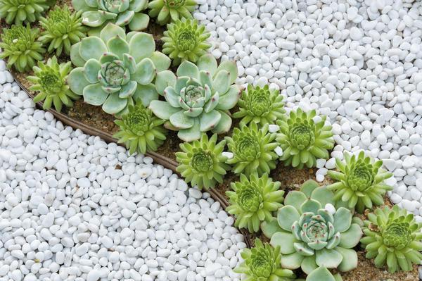 Популярный прием ландшафтного дизайна - имитация воды при помощи растений