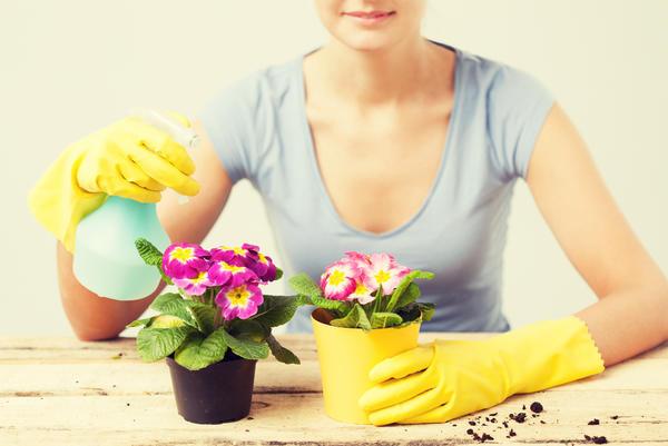 Опрыскивание растений: мой личный опыт