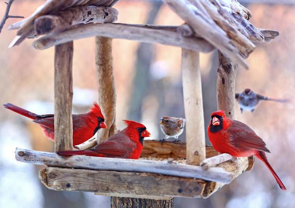 Виды кормушек для птиц
