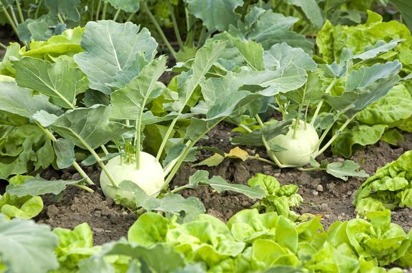 Урожай зависит от питательных веществ почвы