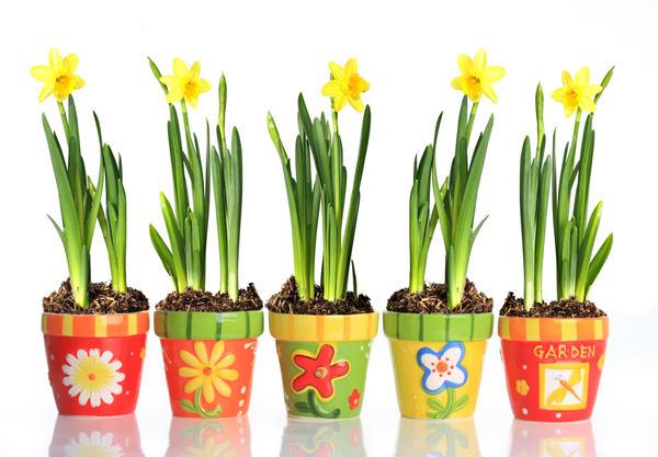 На прилавках и стендах уже выложены многочисленные и разнообразные сорта луковичных и клубнелуковичных растений