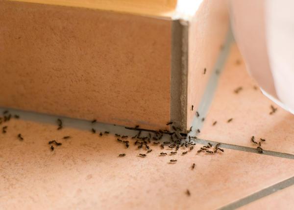 отпугиватель муравьев
