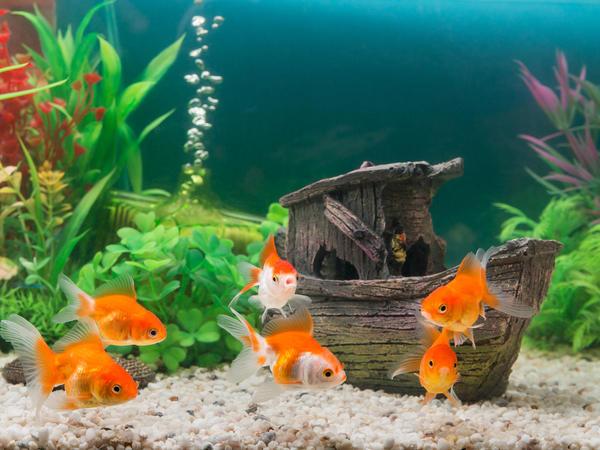 Большие и просторные садовые аквариумы с прозрачными стенками можно сделать еще более оригинальными