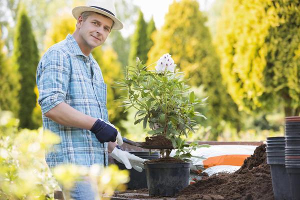 С конца марта - в апреле наступает оптимальное время посадки для кадочных растений