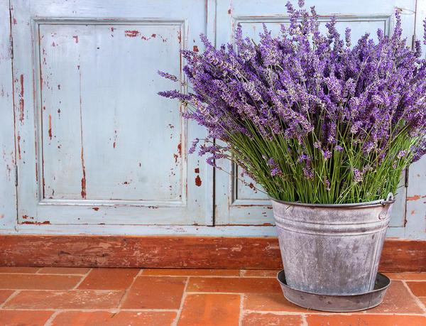 Ведро можно использовать для садового декора