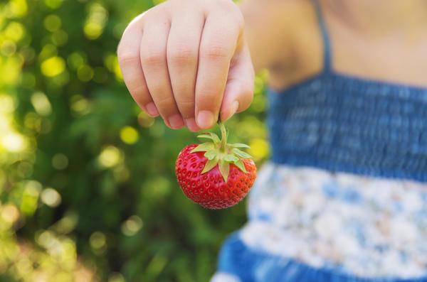 Ведь с чем может сравниться вкус и аромат тёплой, только что сорванной ягоды!