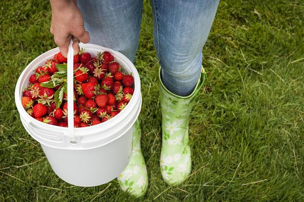 В таком ведре можно держать сыпучие продукты, овощи, ягоды фрукты и т.д.