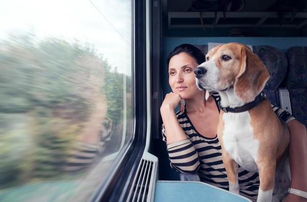 В поездах перевозка крупных собак производится в намордниках и с поводком? в отдельном купе купейного вагона под наблюдением их владельцев или сопровождающих