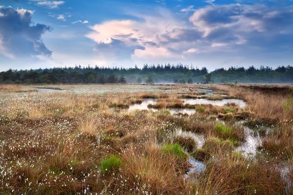 Болото - участок ландшафта, характеризующийся избыточным увлажнением, повышенной кислотностью и низкой плодородностью почвы