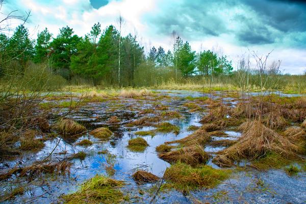 Дренаж - современное решение вопроса осушения, водоотведения