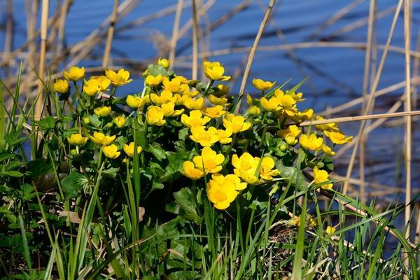 На низинных и верховых болотах встречаются разные растения