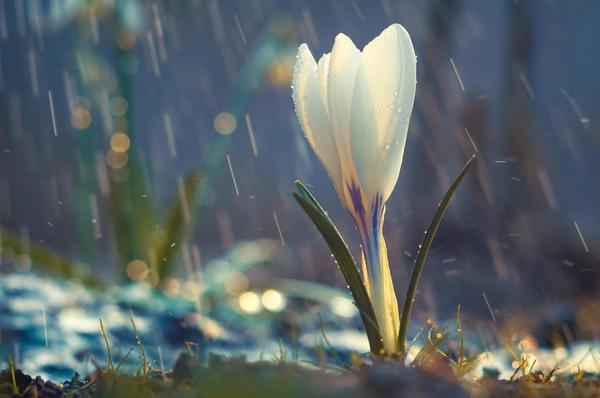 По-настоящему мы понимаем, что пришла весна, когда на даче распускаются первые цветы