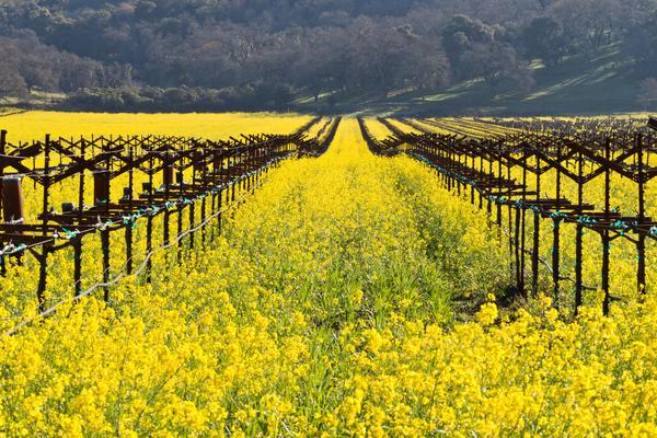 Существует две основные схемы выращивания: одноплоскостная и двухплоскостная