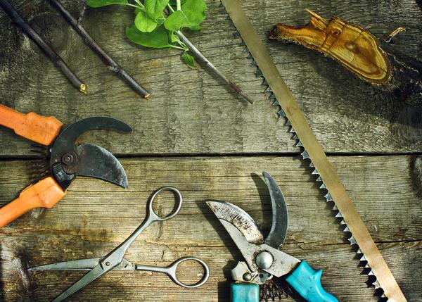 Правильно провести обрезку не получится без арсенала специальных инструментов
