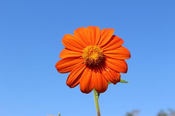 Для посадки этого растения рекомендуется плодородный рыхлый грунт