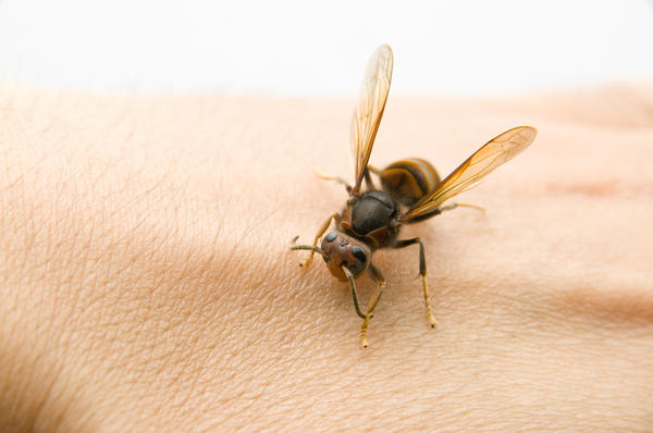 Сода помогает при укусах насекомых