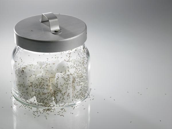 Сода против муравьев