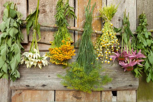Все травки огородник будет заготавливать в нужные сроки, правильно сушить, правильно хранить.