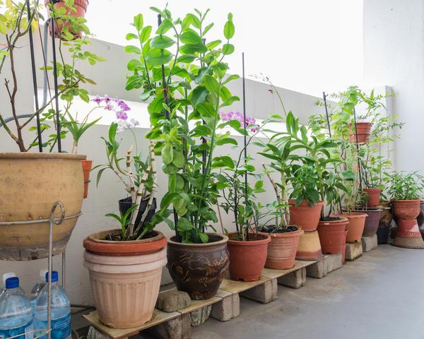 Растения в горшках на веранде