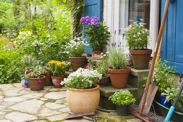 Растения в горшках на террасе