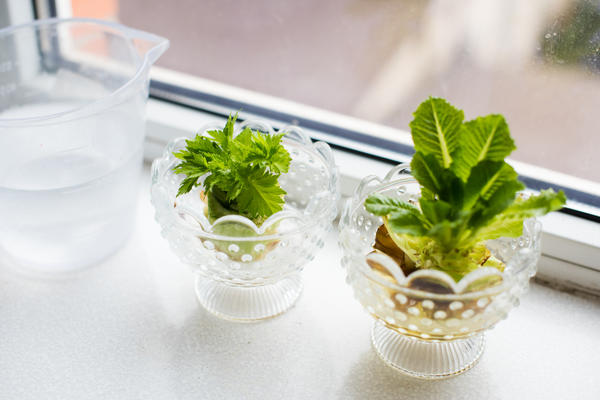 Листовой салат и сельдерей
