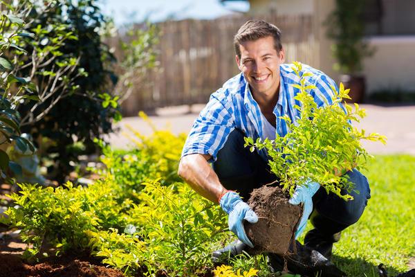 Заботы садово-огородные
