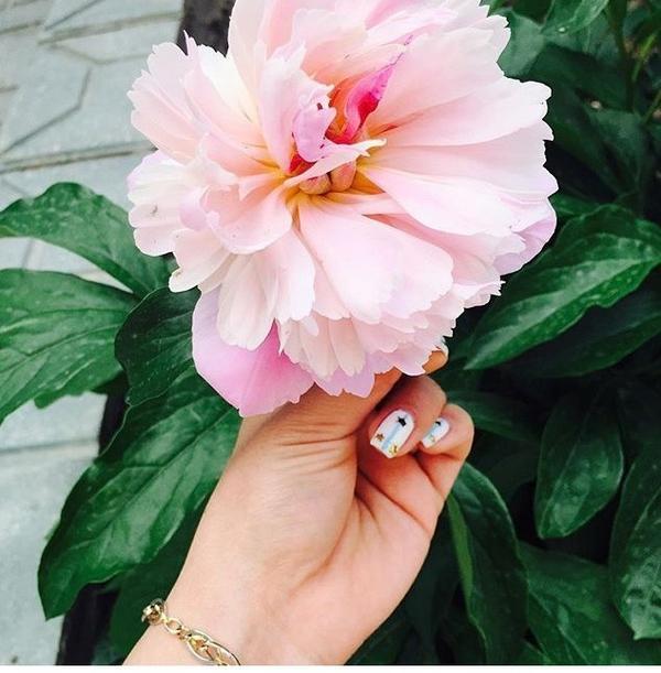 Как называется этот вид цветов?