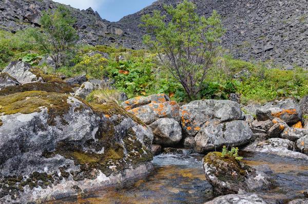 Золотой корень - настоящий дар природы, полезный, красивый, удивительный