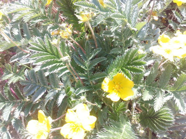 неизвестное растение