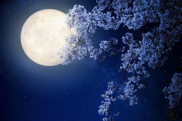 Идея обустройства лунных садов в современном ландшафтном дизайне появилась сравнительно недавно