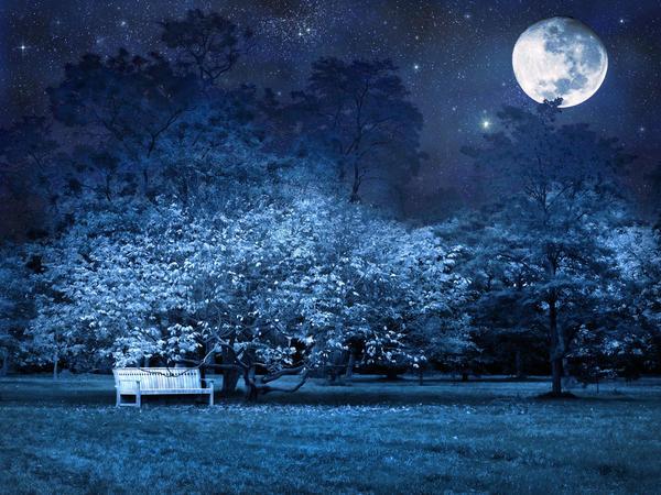 При желании лунный сад можно разнообразить декоративными элементами ландшафтного дизайна