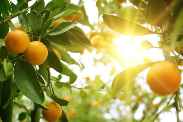 Даже самые передовые технологии не помогут вырастить апельсины на северных болотах