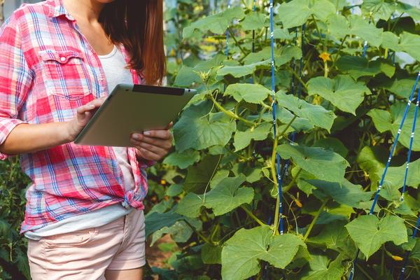 Теперь ответы на свои садово-огородные вопросы ищем в интернете