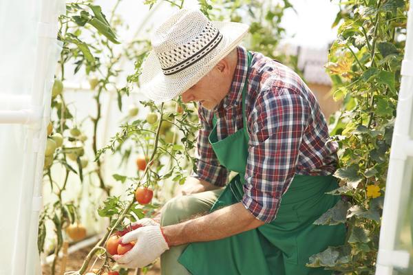 Каждый дачник вольно или невольно становится автором собственной системы земледелия