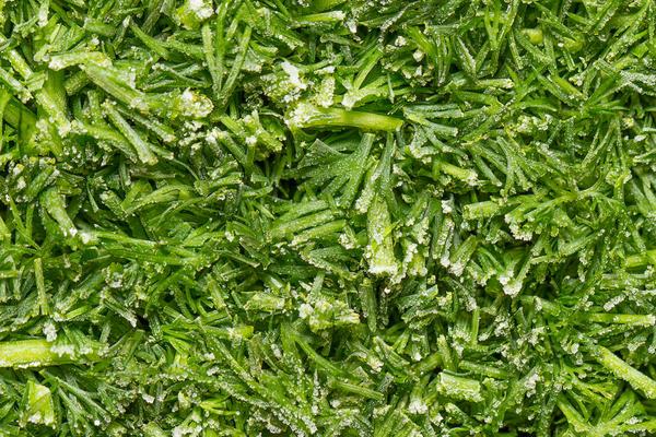Заморозка зелени сухим способом