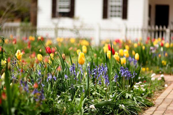 Этот цветник будет появляться в саду только весной, а летом на этом месте будет только газон.