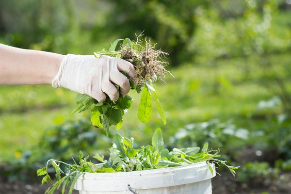 Куда траву пристроить? Конечно в компост