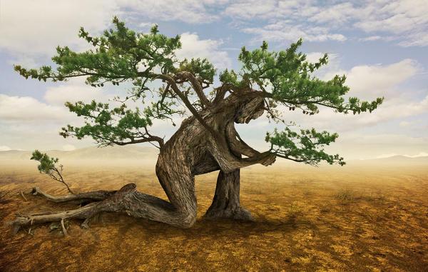 Арбоскульптура - особое искусство создания скульптур из живых деревьев