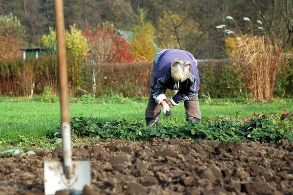 У наших бабушек и дедушек осенняя обработка почвы сводилась к перекопке