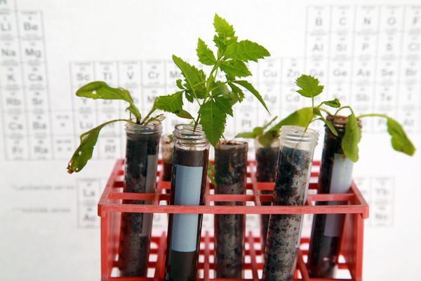 Ландшафтный дизайн базируется на знаниях о потребностях растений