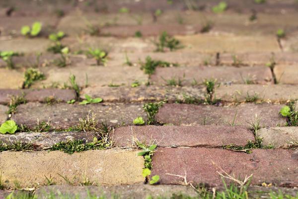 Дорожки и площадки нужно устроить правильно, иначе сорняки будут расти и через них
