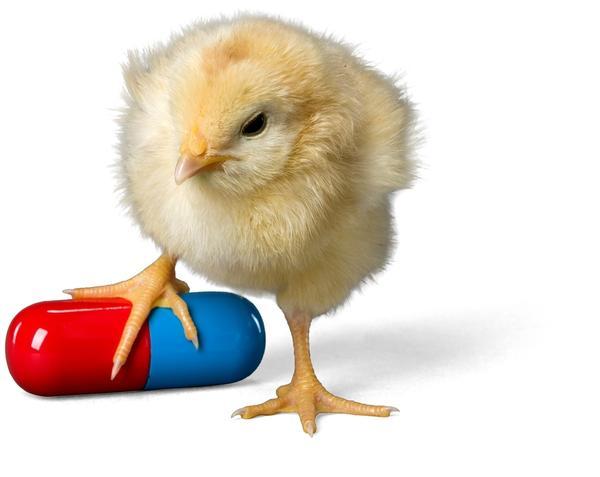 Корм должен быть полноценным, с нужным количеством витаминов, минеральных веществ.