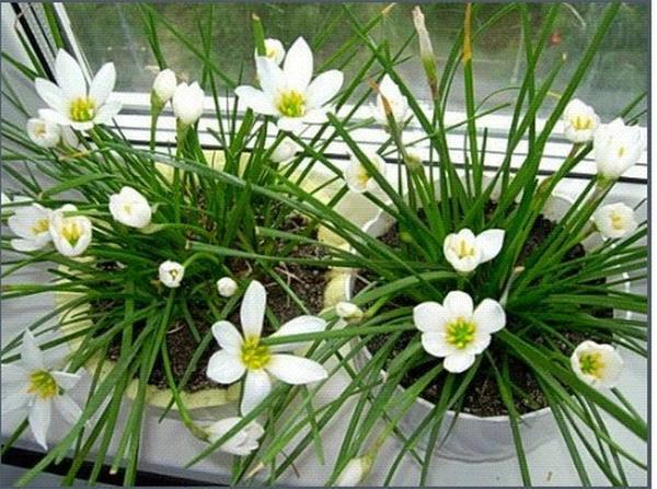 Как называется этот цветок?