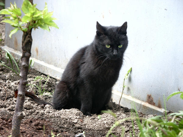 Кошачьим фекалиям не место в огороде