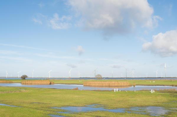 Голландский пейзаж. Польдеры