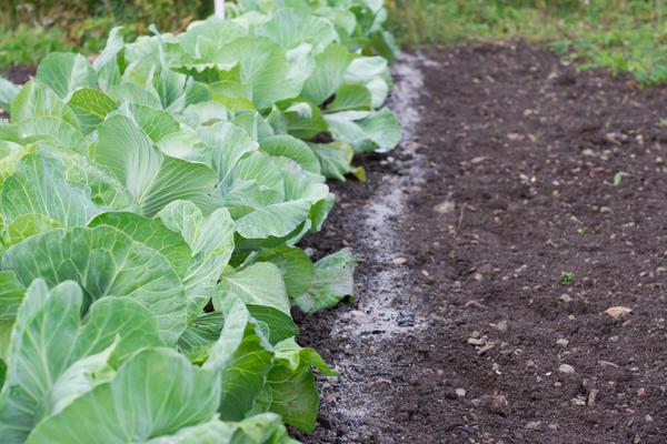 Золу вносят в почвы, в которых ощущается нехватка калия, фосфора и извести.