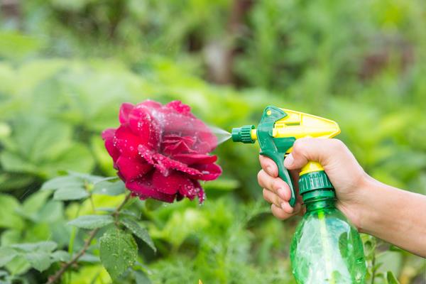 Горчица поможет одолеть вредителей без вреда для здоровья человека